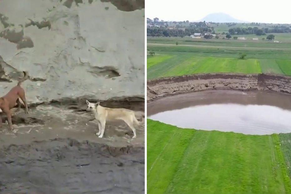 2 perros puebla