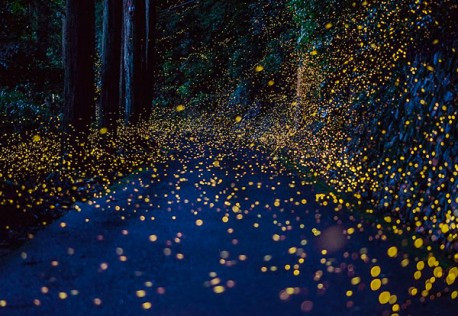 Mexico's firefly tourism